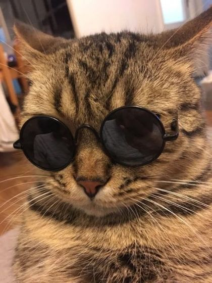 Cool Stylish And Funny Cute Pet Sunglasses UV Protection Sunglasses for Cats or Small Dogs