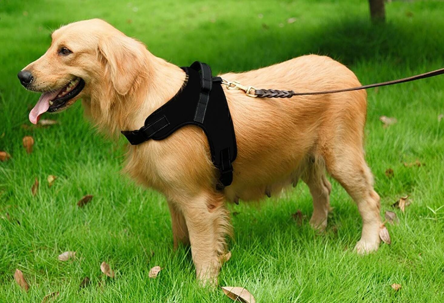 5_11_3 premium dog pet adjustable soft chest harness