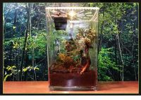 Tropical Reptile Vertical BOX INSECT SPIDER FROG TANK with LED Lighting, Breathable Hole, Drain hole & feeding hole